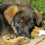 Your Dog Is Sick, Could It Be Poisoning?